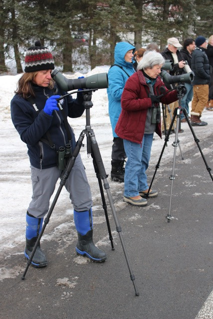 Birders viewing Evening Grosbeaks by Bill Schneider
