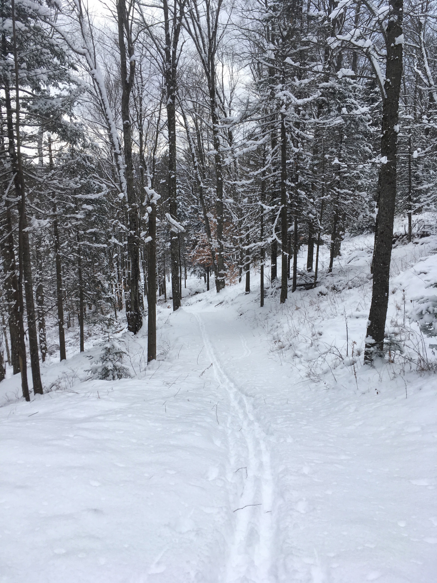 Tracks on ungroomed backcountry trail