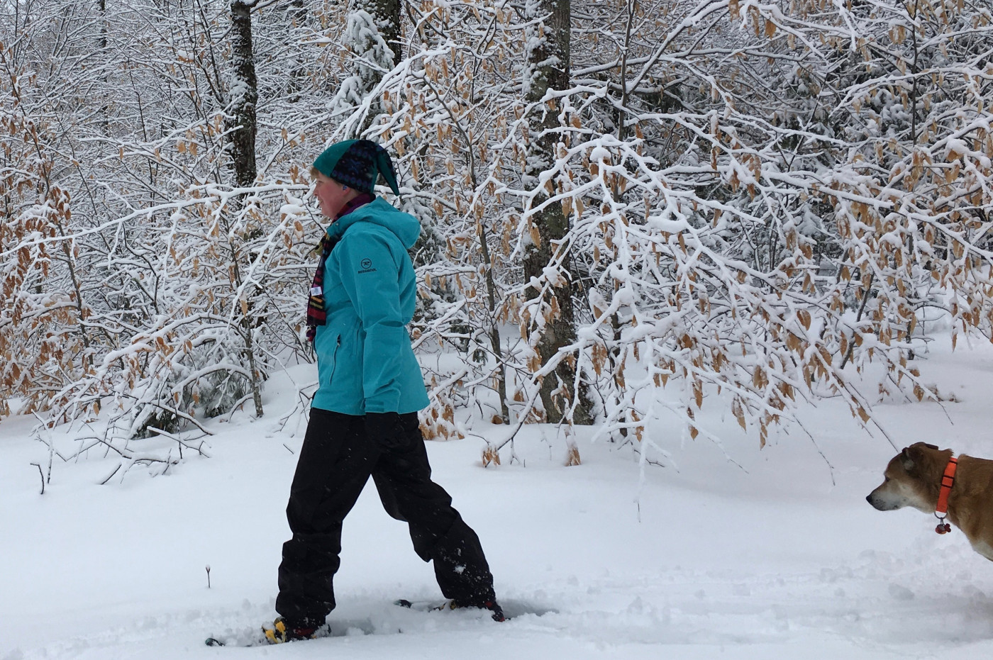 Dog follows snowshoeing woman on trail